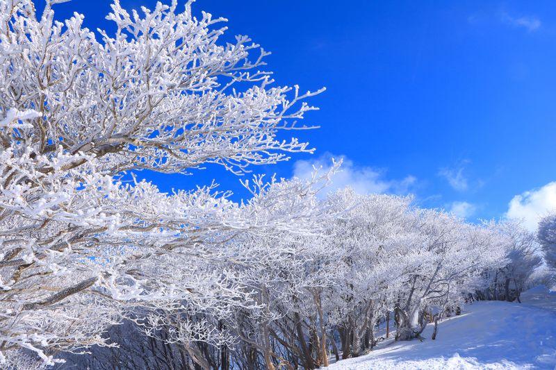 鈴鹿山脈に咲き誇る樹氷の並木道!ロープウェイを使って御在所岳へ