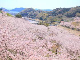 満開の桜並木や渓谷美!小豆島にある4つの絶景ダム巡り