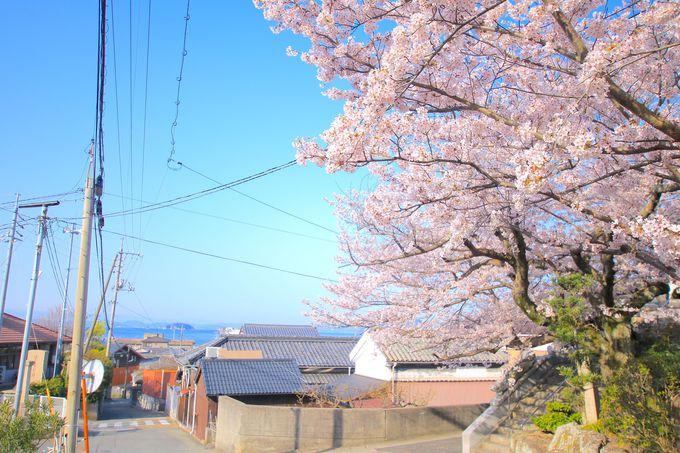 こぢんまりとした坂手港周辺の桜スポット!「観音寺」