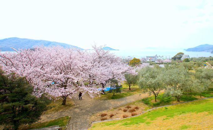 小豆島独ならではの桜のある風景!春の「オリーブ公園」