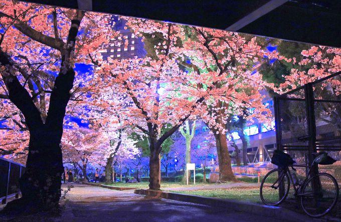 実は都市部の桜スポットが多い大阪!