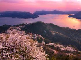 瀬戸内海に咲き乱れる三千本の桜も!岩城島「積善山」の絶景