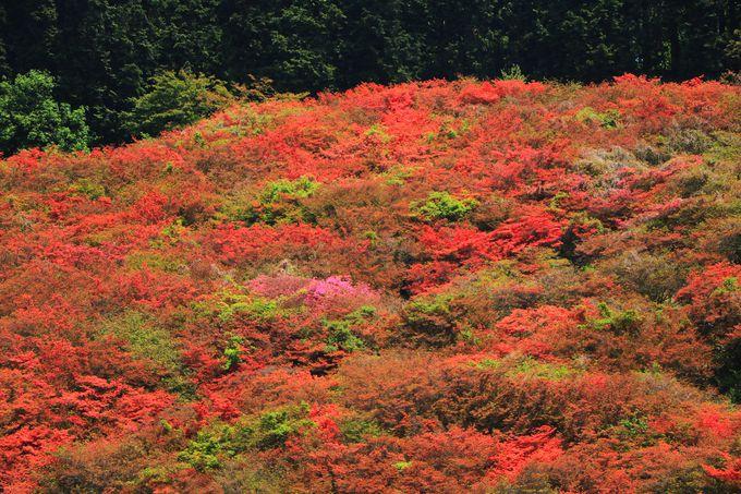 時期限定の大阪の山が誇る絶景を見に行こう!