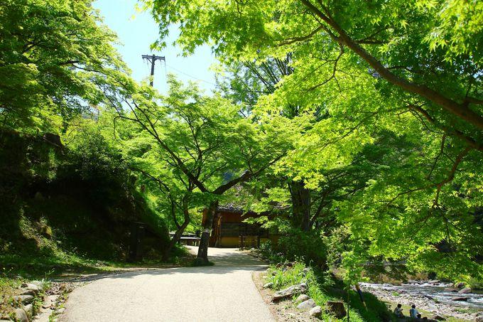 春から夏の「香嵐渓」は青紅葉が生命力を感じさせる癒しの空間