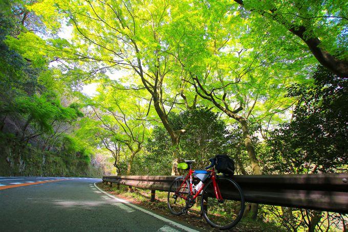 大阪きっての懐の広い自然が広がる北摂