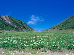 バスで標高2700mへ!雄大な峰と花の楽園「乗鞍岳」トレッキング