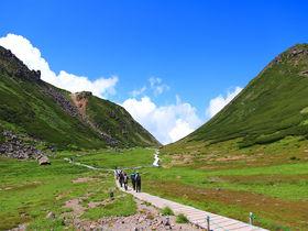 バスで標高2700mへ!雄峰と花の楽園「乗鞍岳」夏山登山