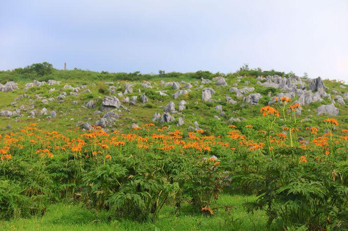四国カルストの大草原をつらぬく絶景道を駆け抜けよう!