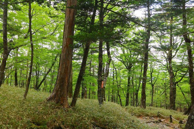 ビジターセンターから軽ハイキングで、いざ秘境の森へ