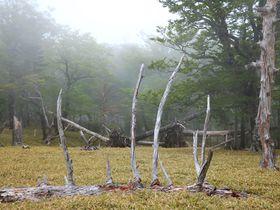 神秘的な雰囲気漂う!奈良県にある秘境「大台ヶ原」ハイキング