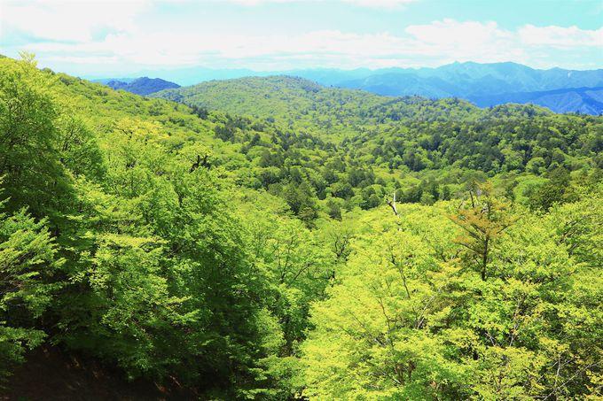 自然の様々な姿を見せてくれる「大台ヶ原」ハイキング