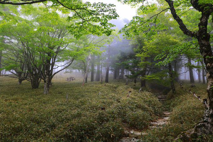 大台ヶ原ならではの断崖「大蛇�ー」と、神秘的な立ち枯れ景観