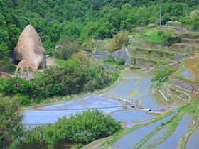 里山の原風景!中山千枚田とアートで「小豆島に恋」する旅を