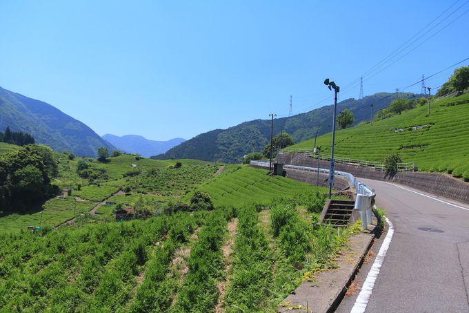 美しい渓流沿いから「天空の茶畑」へ!ウェルカムサービスも嬉しい