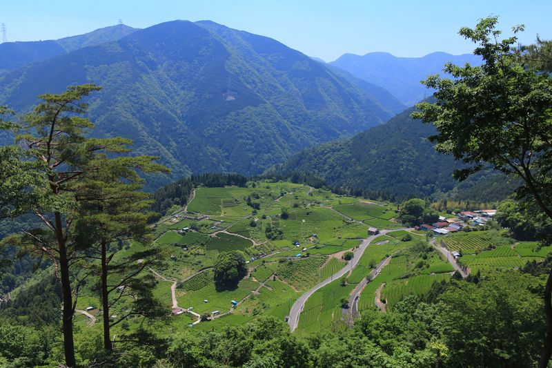 """揖斐川町の大自然に佇む""""岐阜のマチュピチュ""""天空の茶畑へ"""