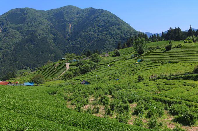 大自然に囲まれて佇む!まるでマチュピチュな茶畑の絶景