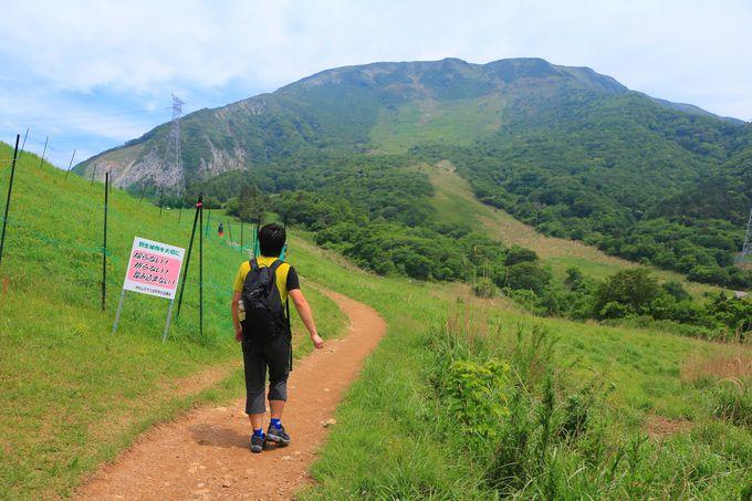樹林帯を登り、伊吹山の山容に立ち尽くす三合目まで