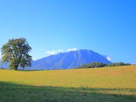 圧倒的な岩手山がそこに!岩手県「小岩井農場〜焼走り」の絶景ルート