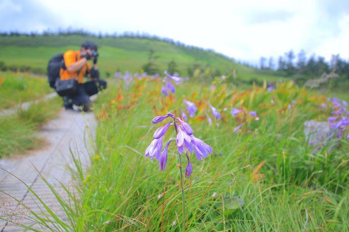山頂以降が醍醐味!「八幡平」の神秘の沼とお花めぐり