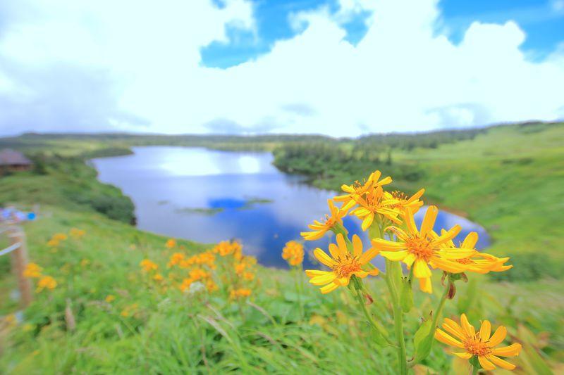 幻想的な水鏡と花々の楽園!岩手県「八幡平」が魅せる山岳世界