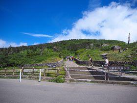 幻想的な水鏡と花の楽園!岩手県「八幡平」へ避暑ハイキング
