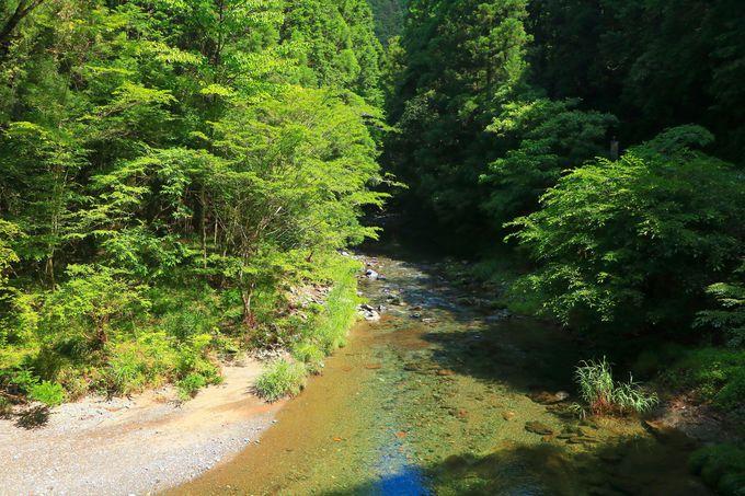 緑溢れる清流のその先に!自然の神秘「阿寺の七滝」