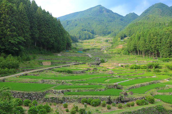 結束力と郷土愛の賜物!心洗われる「四谷の千枚田」の農業景観
