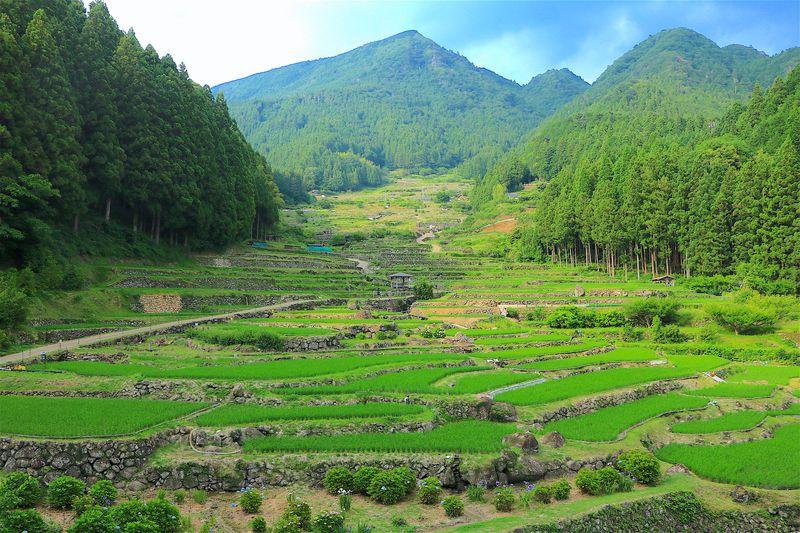 受け継がれる日本の原風景!愛知県新城市「四谷の千枚田」   愛知県   LINEトラベルjp 旅行ガイド