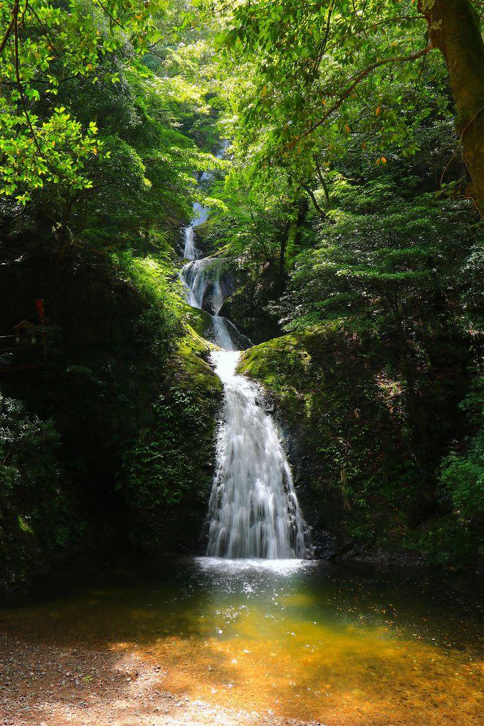 緑溢れる大自然!三河の奥座敷「新城市」の魅力