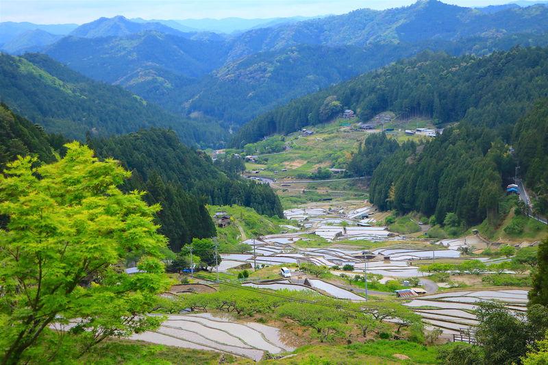 日本の原風景!愛知県新城「四谷の千枚田」でパワーチャージ