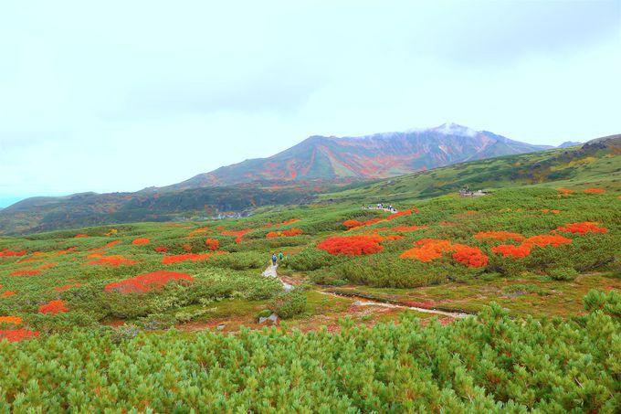 山岳美と鮮やかな紅葉が織りなす世界!大雪山・旭岳