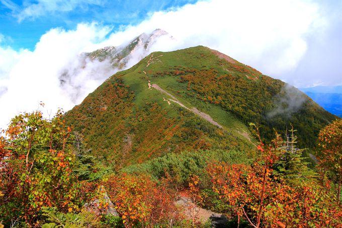 雄大な尾根に灯る紅葉!双児山から眺める初秋の甲斐駒ヶ岳