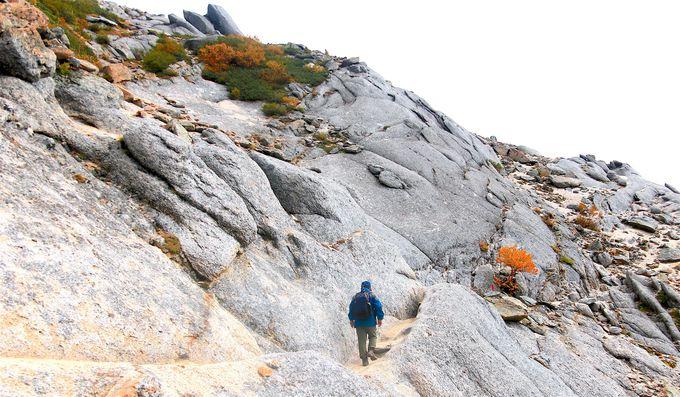 山頂周辺は圧倒的スケールの紅葉の連続!