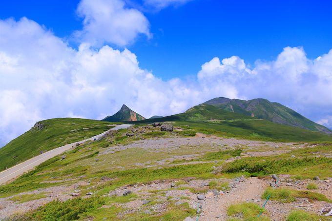 少し足を伸ばしてコマクサ大群落とハートの池!大黒岳登山