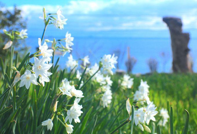 田島に佇む秘密の花園!やぶ椿と水仙の里