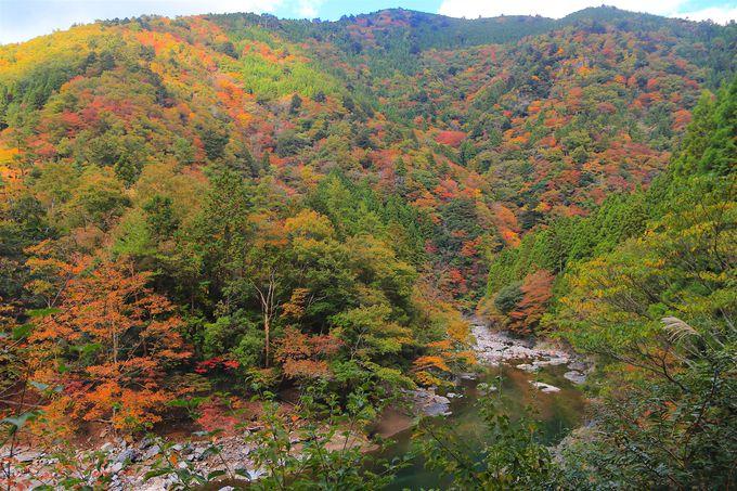 心洗われる渓流とポツポツと染まる紅葉!癒しの朽木渓流