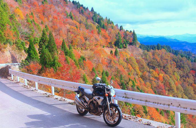 滋賀の新紅葉名所「おにゅう峠」の絶景を見に行こう!