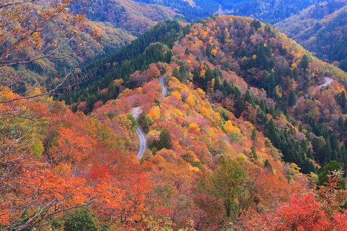 鯖街道の秘境「おにゅう峠」が魅せる美しい紅葉パノラマ