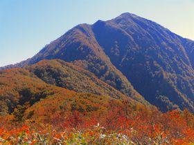 登山家が愛した越前大野の名峰「荒島岳」!心洗われる紅葉のブナ林も
