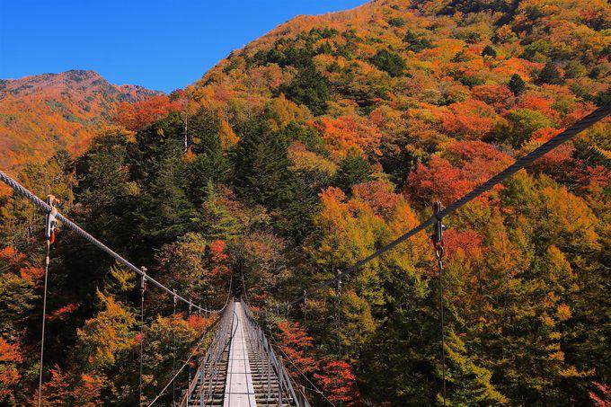 絶景の「林道東俣線」!吊橋と紅葉のコントラストが至宝