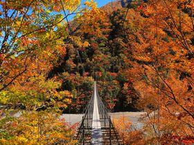これぞオクシズのポテンシャル!静岡県「林道東俣線」の紅葉が至宝
