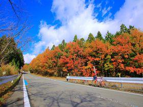 和歌山「高野龍神スカイライン」は紅葉が美しい関西屈指の絶景道