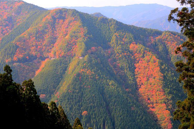 紅葉が美しすぎる!秋の「高野龍神スカイライン」は別格