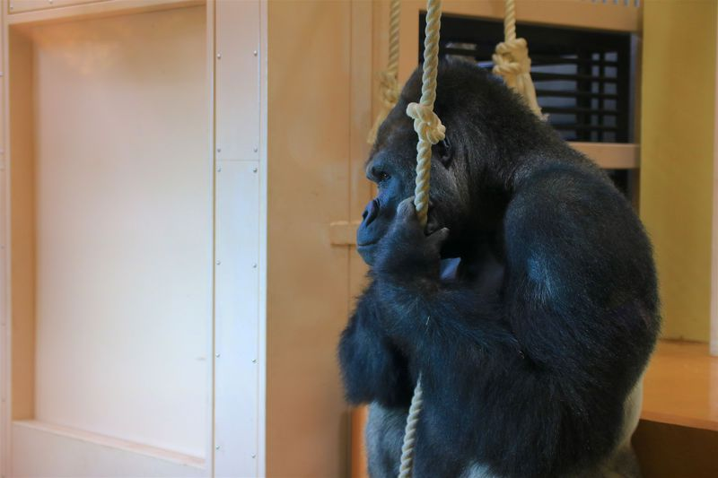 愛知県の定番観光スポット「東山動植物園」