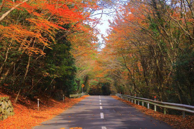 「小豆島ブルーライン」から仰ぎ見る奇岩×紅葉