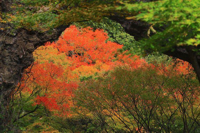 トレッキングで楽しむ寒霞渓「裏八景」の紅葉!石門洞も