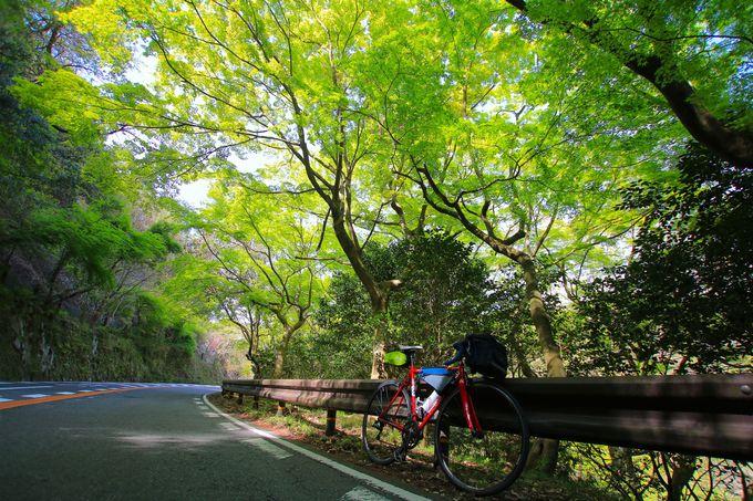 癒しの自然が広がる「箕面」!大阪府民の憩いの場