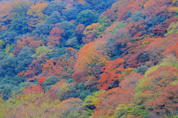 箕面公園の旬は秋!里山に色づく鮮やかな紅葉に癒されよう