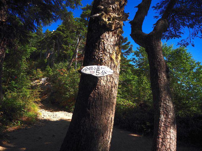 静かなアルプスの森を行く合戦尾根ルート