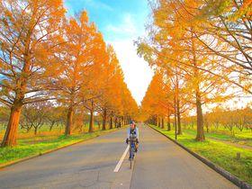 紅葉×道のコラボ!秋だからこそ訪れたい関西の絶景道5選